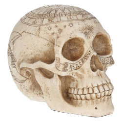 Astrological Skull - Crâne...